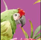 Tropical fuchsia